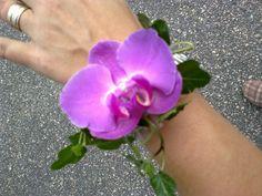 Kaason rannekukka, lila orkidea.