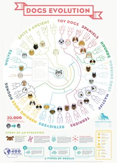 DOGS EVOLUTION - Infographic Poster
