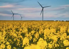 Energy Efficiency and Renewables Are Lowest Risk/Cost Investments for Utilities - Renewable Energy World Strategic Innovation, Future Energy, Wind Power, Energy Technology, Energy Efficiency, Renewable Energy, Ecology, Idaho, The Expanse