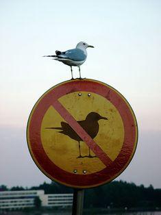bird-on-no-bird-sign by Blackwood, via Flickr