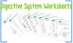 """This product is a series of Worksheets about the Digestive System: 1.A """"Color and label"""" worksheet; 2.A """"One-to-one correspondence"""" worksheet; 3.A """"Complete with the words"""" worksheet; 4.A """"Fill in the blanks"""" worksheet; 5.A """"True or False"""" worksheet; 6.A Digestive system quiz; 7.A Digestive system puzzle; 8.A """"Word search"""" worksheet; 9.A """"Crosswords"""" worksheet. The answer key is included."""