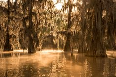 North America | stefanforster.com, Lake Martin next to Lafayette - Louisiana