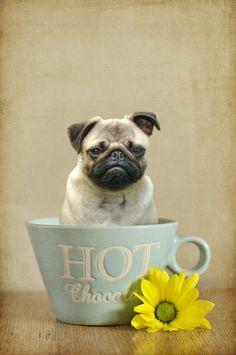 Photo Pug in a mug by Cathryn Hardwick on 500px