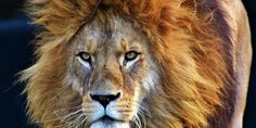Pro-Trophy Hunting Lawyer Appointed Key Role at US Fish and Wildlife Service Animal Welfare Board, Lion Pride, Trophy Hunting, Cry For Help, Animal Rescue Site, Kruger National Park, Interesting News, Nature Reserve, Big Cats
