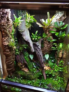 Image result for crested gecko vivarium