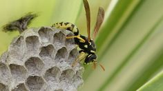 How to keep wasps from returning