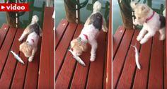 Cão Assusta-se Ao Conhecer Um Peixe Pela Primeira Vez