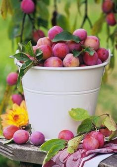 plums in a bucket