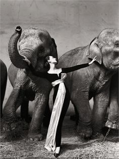 Dovima with Elephants 1955 Richard Avedon