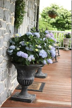 One way to beautify the entrance of your home is to place some flower pots close to the door. Here are several front door flower pots to inspire Flower Pots, Spring Garden, Hydrangea, Flowers, Garden Urns, Porch Planters, Garden, Plants, Front Yard