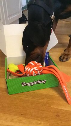 Chanti - DoggieBag.no #DoggieBag #Hund #Dog #dogs