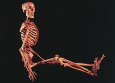 The skeleton of a human male in a sitting position.    Credit: Wellcome Library, London.