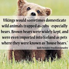 "viking facts - Vikings would sometimes domesticate wild animals trapped as cubs especially bears. Brown bears were widely kept and were even imported into Iceland as pets where they were known as ""house bears. Norse Pagan, Old Norse, Norse Mythology, Viking Life, Viking Warrior, Viking Facts, Viking Myths, Nordic Vikings, Viking Culture"