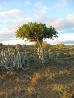 Noorsveld Port Elizabeth, South Africa, African, Herbs, Landscape, Places, Beautiful, Corner Landscaping, Herb