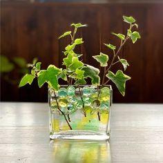 空き瓶や手持ちのフラワーベースと、身近なグリーン🌿で涼しげなインテリアに LIMIA (リミア) Flower Vases, Flower Arrangements, Flowers, Small Bouquet, Terrarium, Glass Vase, New Homes, Fruit, Interior