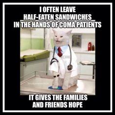 Funny True Facts, Really Funny Memes, Stupid Funny Memes, Funny Relatable Memes, Hilarious, Funny Animal Quotes, Animal Humor, Funny Quotes, Funny Things