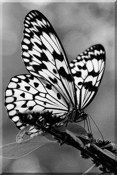 (3) Love, Dreams & Butterfly Wings ~