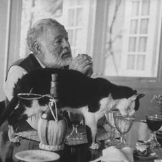 Hemingway and one of his cats...Ernest Hemingway was once given a 6 toed cat by a ship Captain. That line of polydactyl cats can still be seen today at the famous Hemingway museum home in Key West.