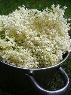 If you've made elderflower champagne or cordial before, elderflower wine is the next delicious step. An easy winemaking recipe for home brew beginners.