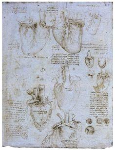 Une année de SVT au collège Henry Berger » Archive du blog » L'appareil circulatoire et excréteur selon Léonard de Vinci