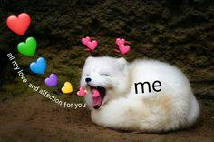 This is just Soo cute Memes Amor, Dankest Memes, Funny Memes, Kermit, Heart Meme, Heart Emoji, Cute Love Memes, When You Smile, Cartoon Memes