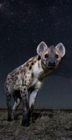 Un photographe britannique a pu prendre de superbes photos d'animaux en pleine nuit en Zambie.