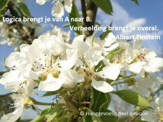 Spreek je verbeelding aan. Meer op www.facebook.nl/hooggevoeligheelgewoon en www.hooggevoeligheelgewoon.nl