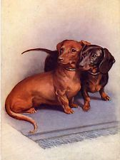 DACHSHUND TWO DOGS CHARMING DOG PRINT MOUNTED READY TO FRAME