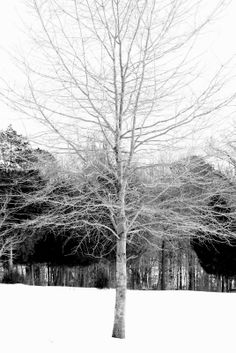 beautiful black and white images outdoor snow
