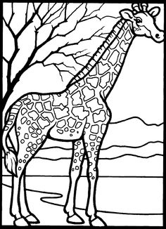46 Best Giraffes Images On Pinterest