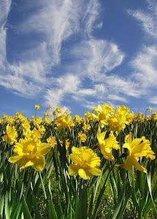 I wandered lonely as a cloud  That floats on high o'er vales and hills,  When all at once I saw a crowd,  A host, of golden daffodils;  Beside the lake, beneath the trees,  Fluttering and dancing in the breeze.~~William Wordsworth