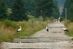 Discover the world through photos. Storks, Bald Eagle, Places Ive Been, Holidays, World, Animals, Holidays Events, Animales, Animaux