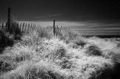 Dunes at Newborough Beach, Anglesey