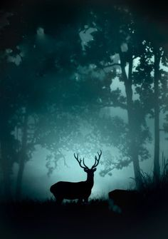 A Barasingha (Swamp Deer) found only at Kanha National Park, India in an early winter morning. World Photography, Photography Awards, Travel Photography, Wooden Pallet Christmas Tree, Oh Deer, Winter Beauty, Silhouette Art, National Parks, Sky
