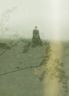 Layered sage photography; source is jpeg -- no other info, but another pin has inconspicuous 'Wuthering Heights' label.