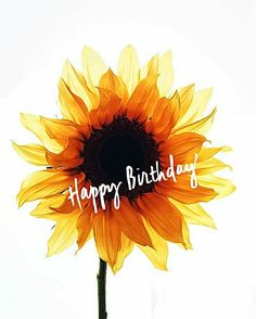 Happy Birthday #sunflower