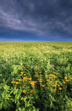 Sunflowers peek out of tall prairie grass in the Neal Smith National Wildlife Refuge.   - HouseBeautiful.com