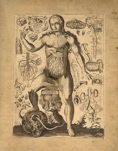 Johan Remmelin, From: Catoptrum Microcosmicum, 1619