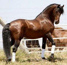 34 Horses found Alive