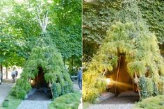 Make a Living Teepee for the Backyard