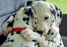 Google Image Result for http://www.funnydogsite.com/pictures/Dog_Hug.jpg