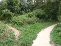 Two paths diverge in the woods...