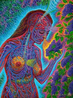 Alex Grey Visionary : Foto