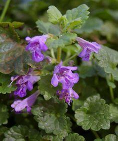 Botanical Flowers, Herbalism, Healthy Living, Hair Beauty, Herbs, Blog, Herbal Medicine, Diet, Healthy Life