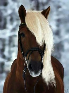 Horse.This horse is the most beautiful and amazing horse in the world, sorry others horses.But I believe that every horse is beautiful