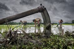 """""""2015 CGAP Photo Contest: Winners and Finalists"""" by CGAP on Exposure"""