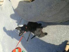 Tafi going for a walk