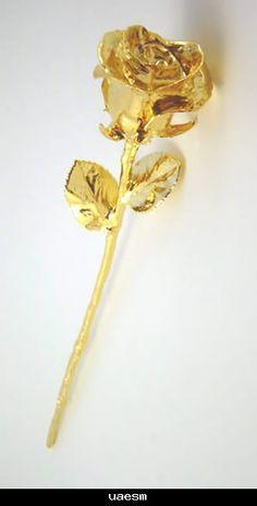 Yaring   damas gold rose