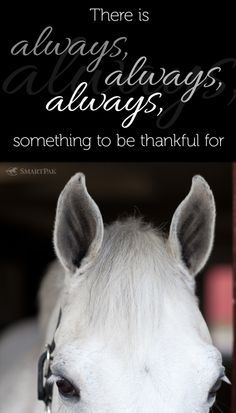 Horse-Quotes-And-Sayings-24.jpg 236×413 pixels