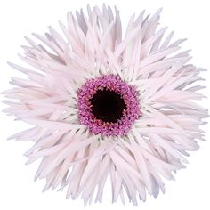 Germini Punki Elida (Mini Gerbera) is a pretty Pink cut flower. Gerbera, May Flowers, Amazing Flowers, Wedding Flower Arrangements, Wedding Flowers, Florist Supplies, Gerber Daisies, Flowers Delivered, Flower Food